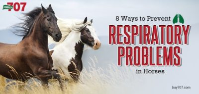 respiratory problems in horses