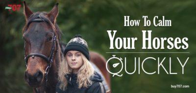 Calm Your Horses