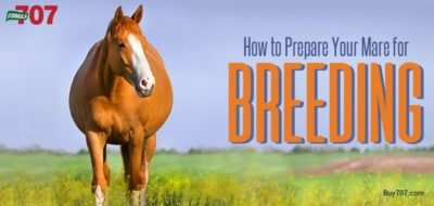 How to Prepare Your Mare for Breeding