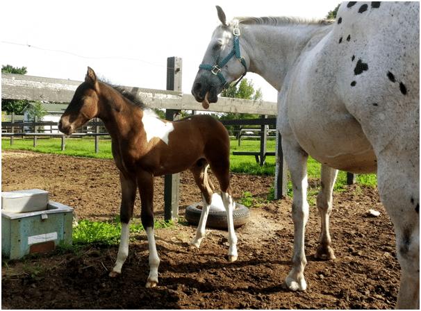 Foal nutrition