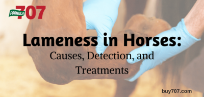 Lameness in Horses: Causes, Detection, and Treatments (buy707.com)