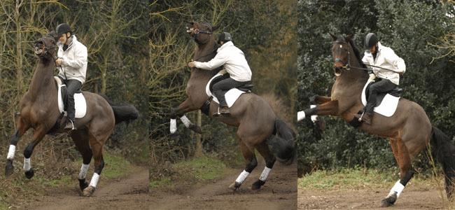 Rearing - Anxious Nervous Horse Blog