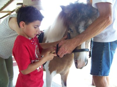 PATH INTL APPROVED IMAGE 3 Equine-assisted Therapy