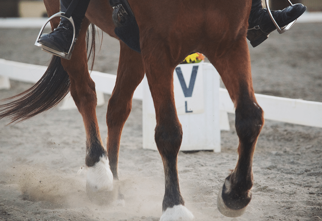 bay dressage horse legs in a competition arena