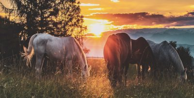 four horses grazing in a pasture at sunset