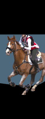 Cross Country horse running with rider