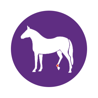 injured horse holding up right hind leg icon
