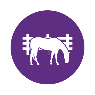 retired horse grazing in pasture icon